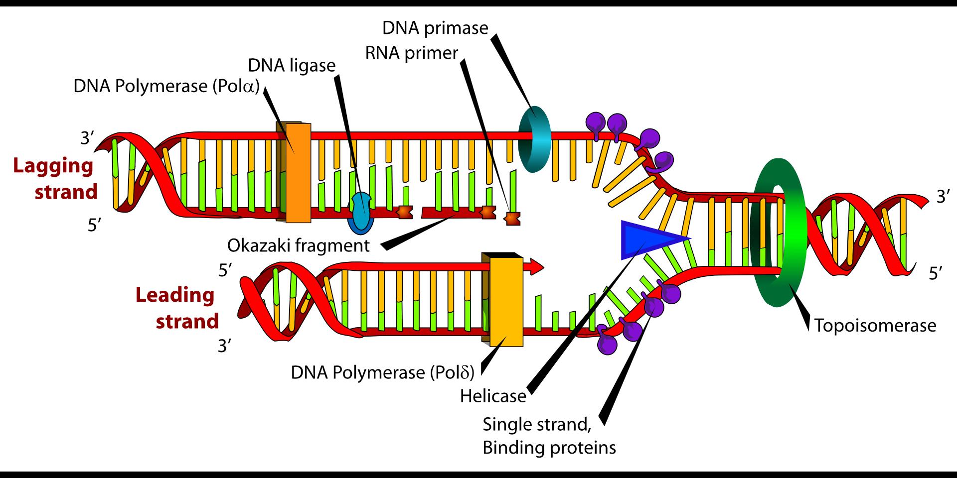 diagram-41531
